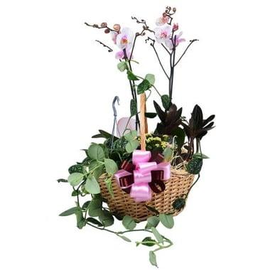 Композиция из растений Киев