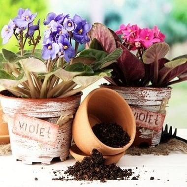 Пересадка маленьких растений Киев