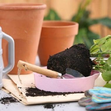 Пересадка средних растений Киев