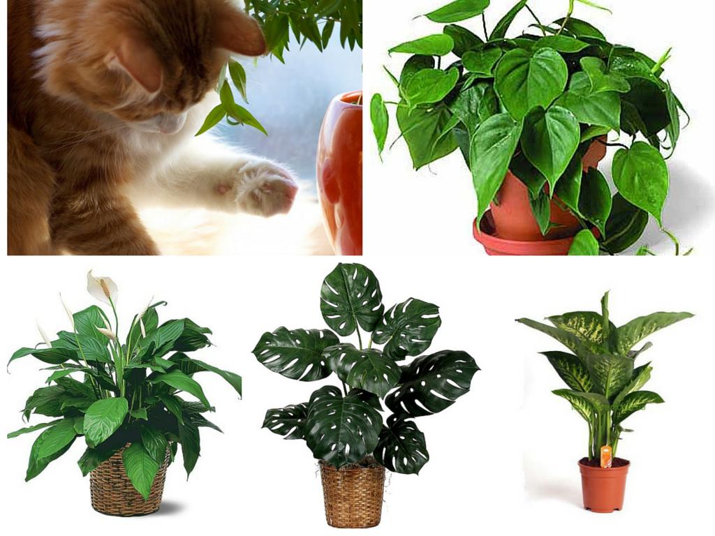 герпес ядовитые цветы для кошек фото матовом фоне можно