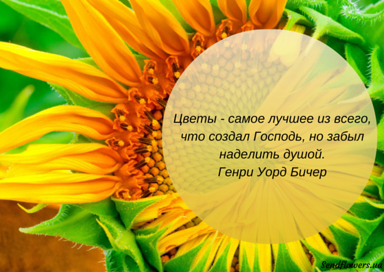 Красивые фразы в открытку с цветами