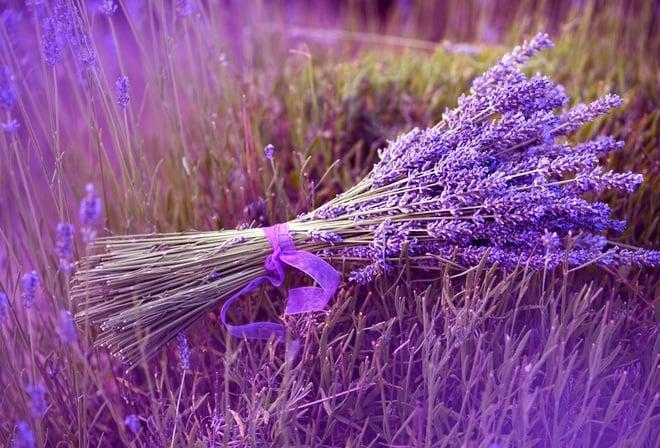 http://www.sendflowers.ua/images/content/lavanda-v-kachestve%20podarka5.jpg