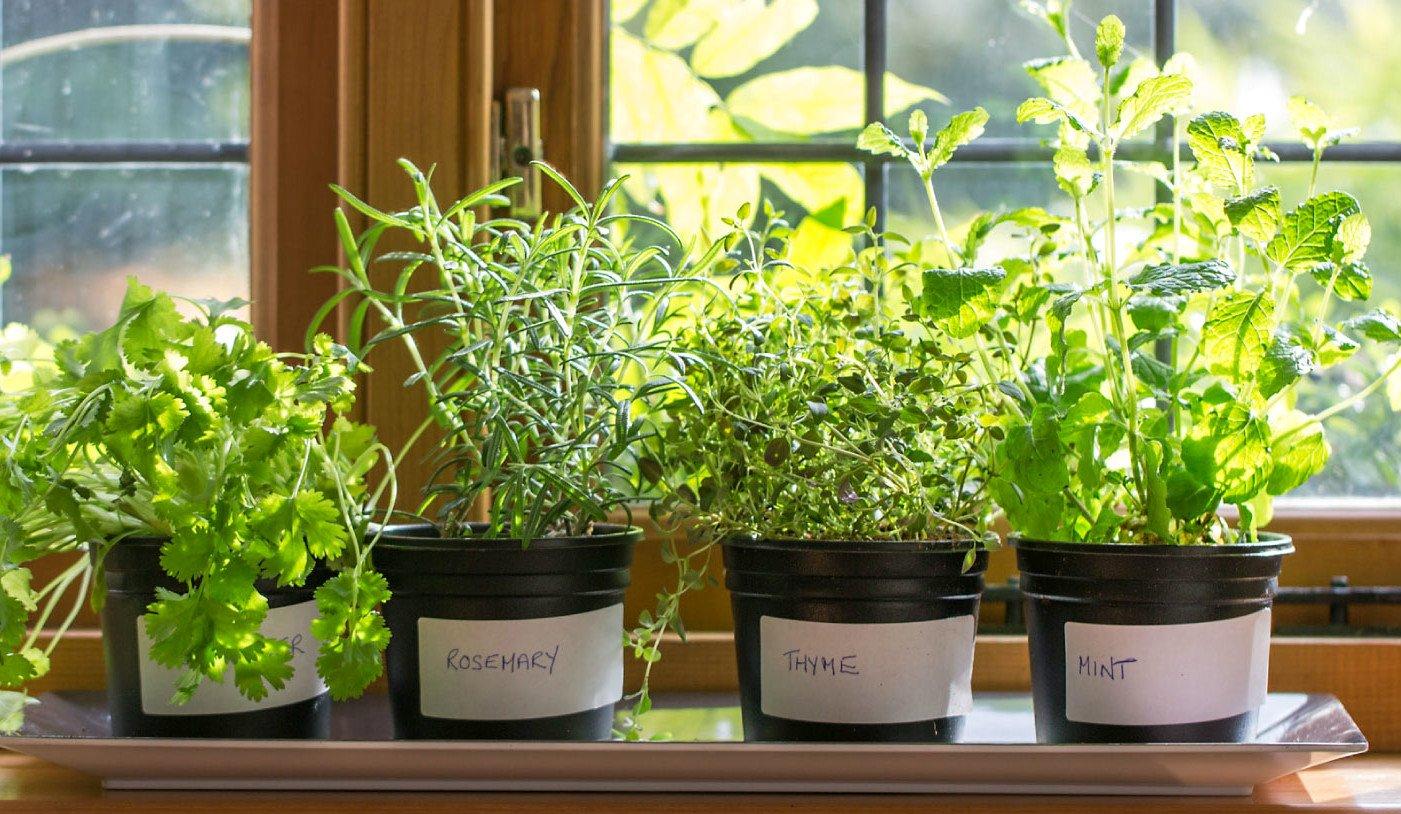 Прибыльный бизнес: выращивание зелени на продажу 97