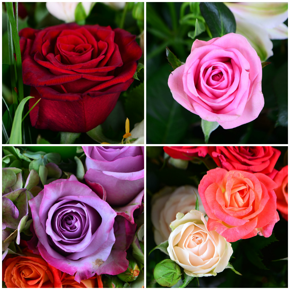 Самые красивые розы в букетах