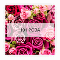 101 роза по Червонозаводскому