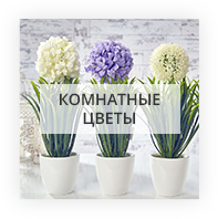 Комнатные цветы Киев