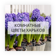 Комнатные цветы Kiev