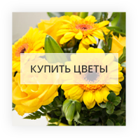 Купить цветы Гаага