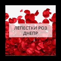 Лепестки роз Kiev
