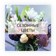 Сезонные цветы Запорожская область