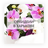 Орхидеии в Харькове