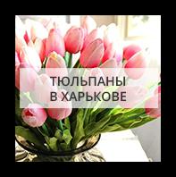 Тюльпаны в Харькове