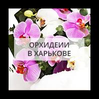 Орхидеи Одесса